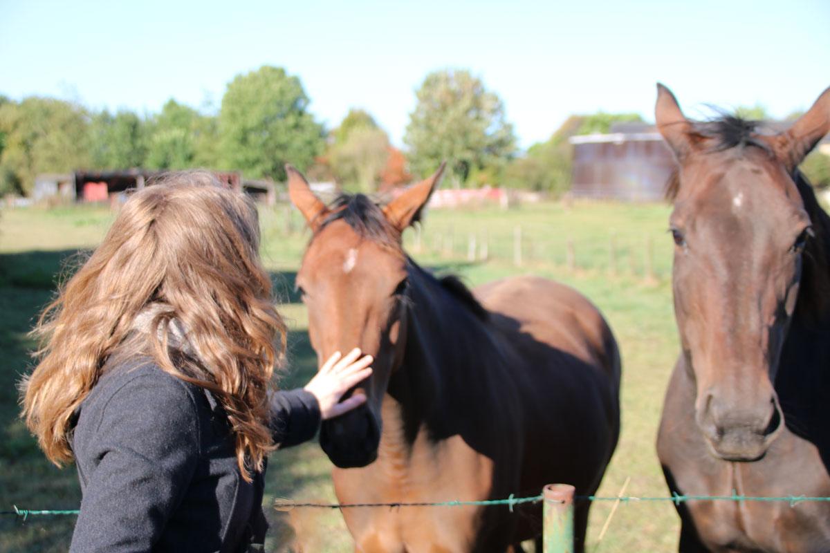 paarden-aaien-herfstwandeling